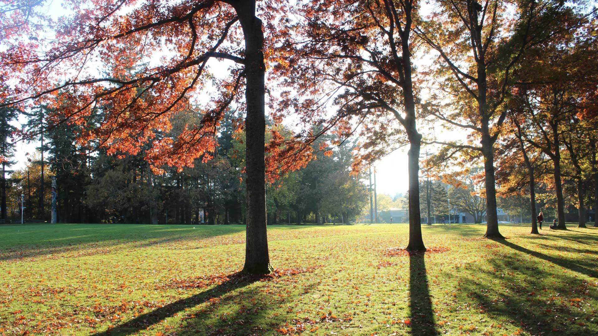Trees beside open field with leaves and sunlight at the University of Victoria